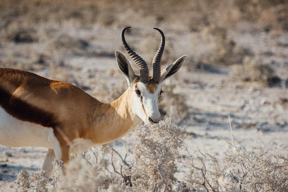 Namibiablog-30.jpg