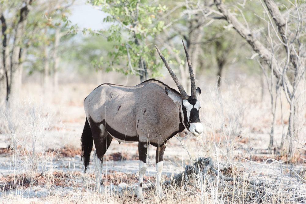 Namibiablog-31.jpg