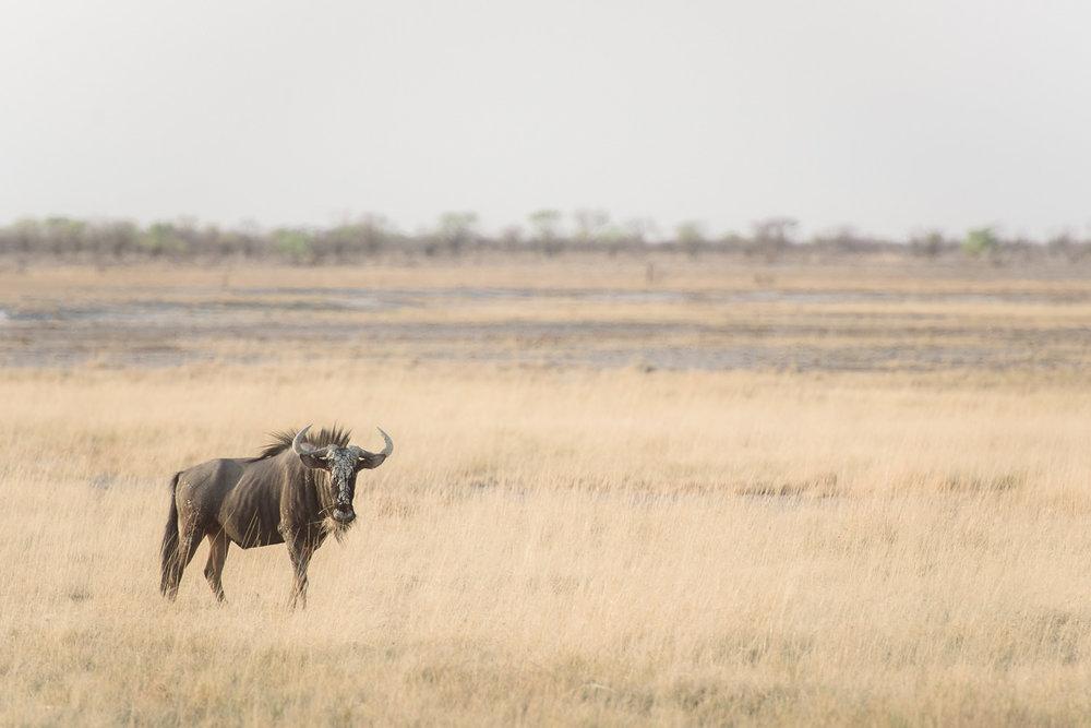Namibiablog-32.jpg