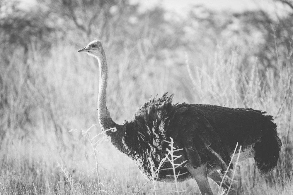 Namibiablog-37.jpg