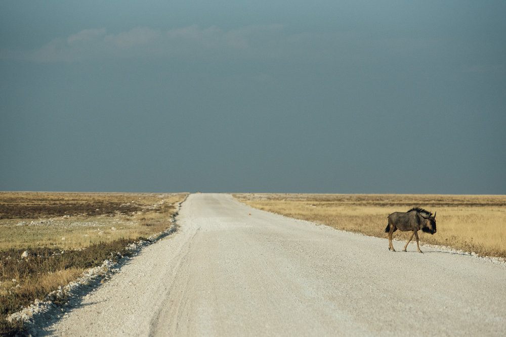 Namibiablog-40.jpg