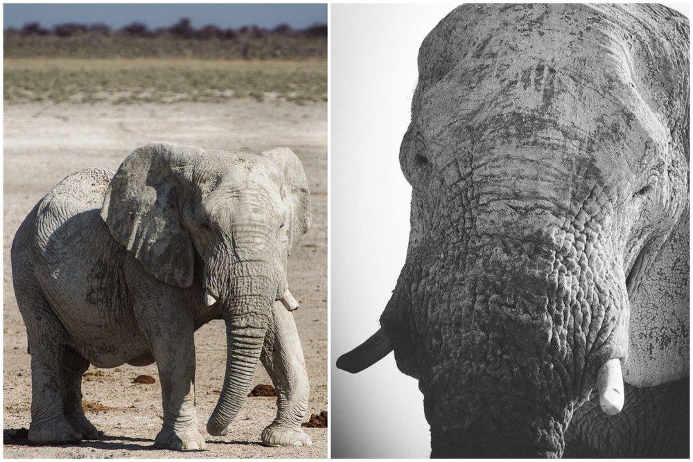 Namibiablog-42-KOLL.jpg