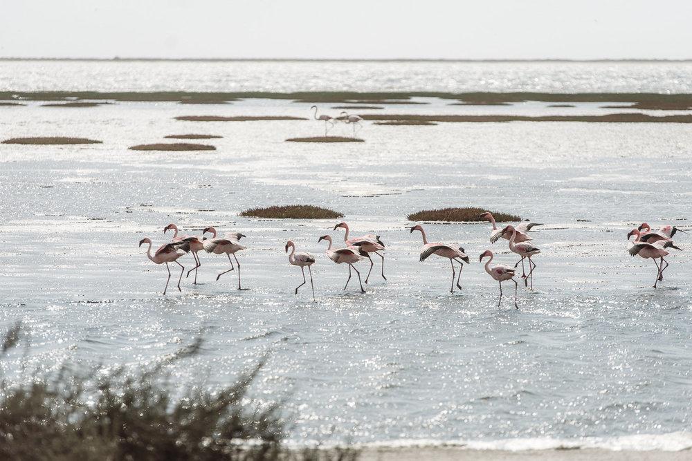 Namibiablog-56.jpg