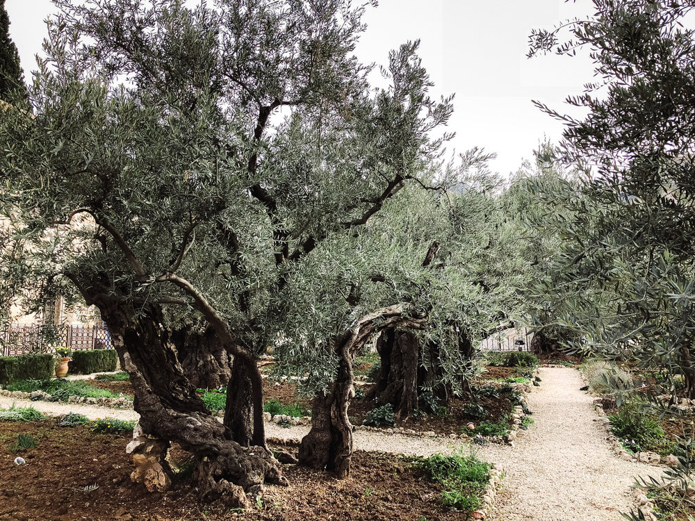 israeljordan-19.jpg