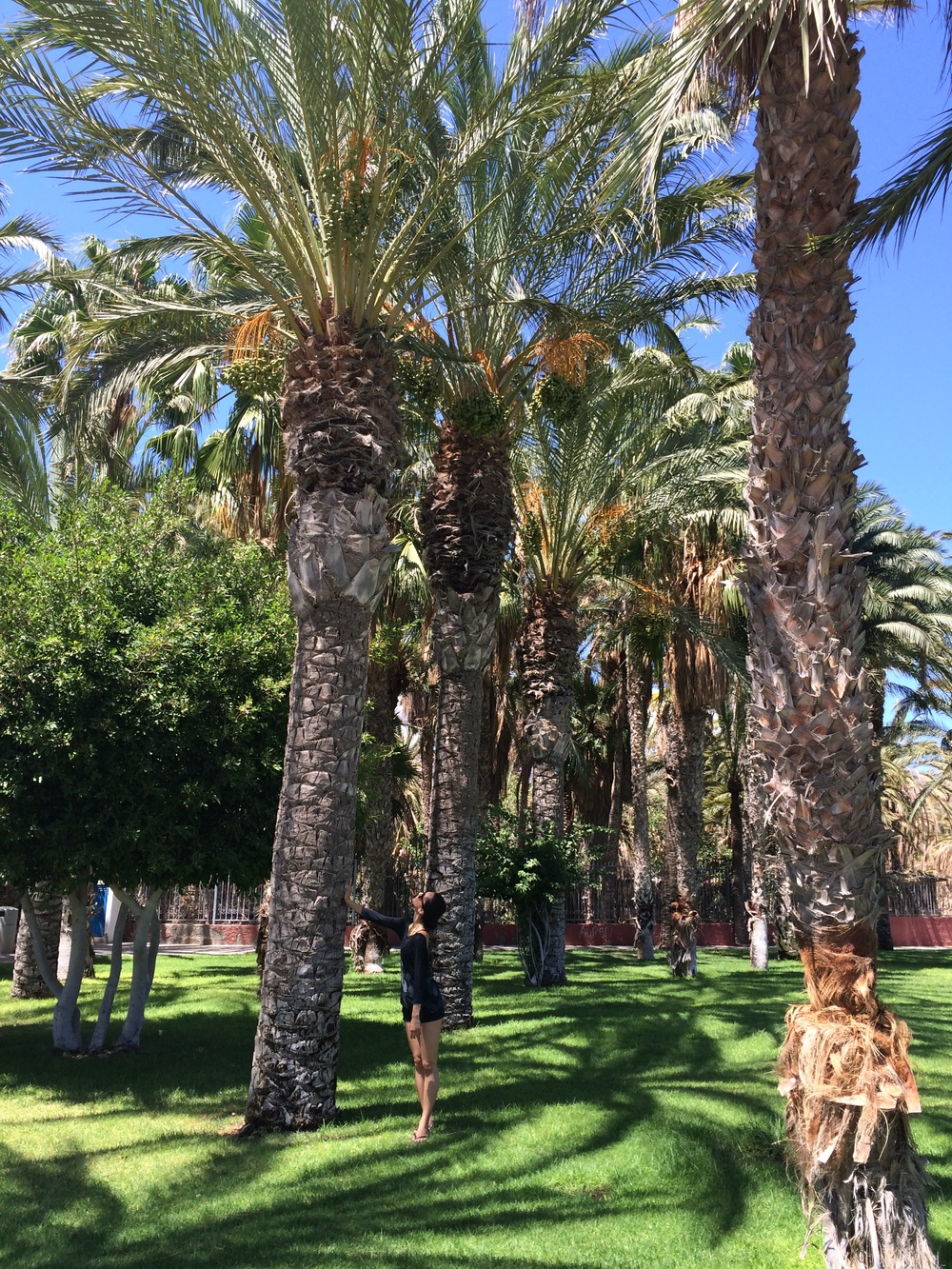 04.Sep 2015 : Mit vielen großen Palmen