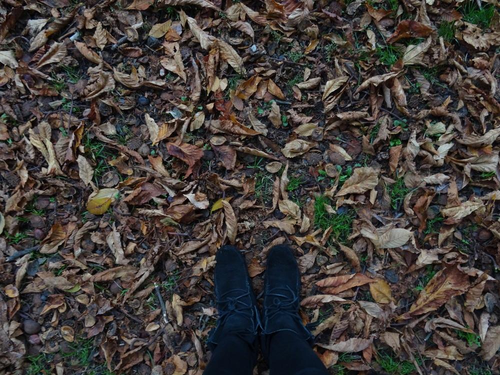 15.Okt 2015 : abgefallenes Laub