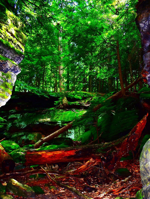 Deep inside a green forest, by Maggie Elmer