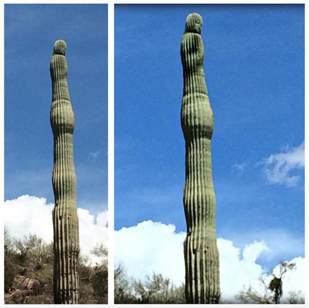 Cactus_man_face.jpg