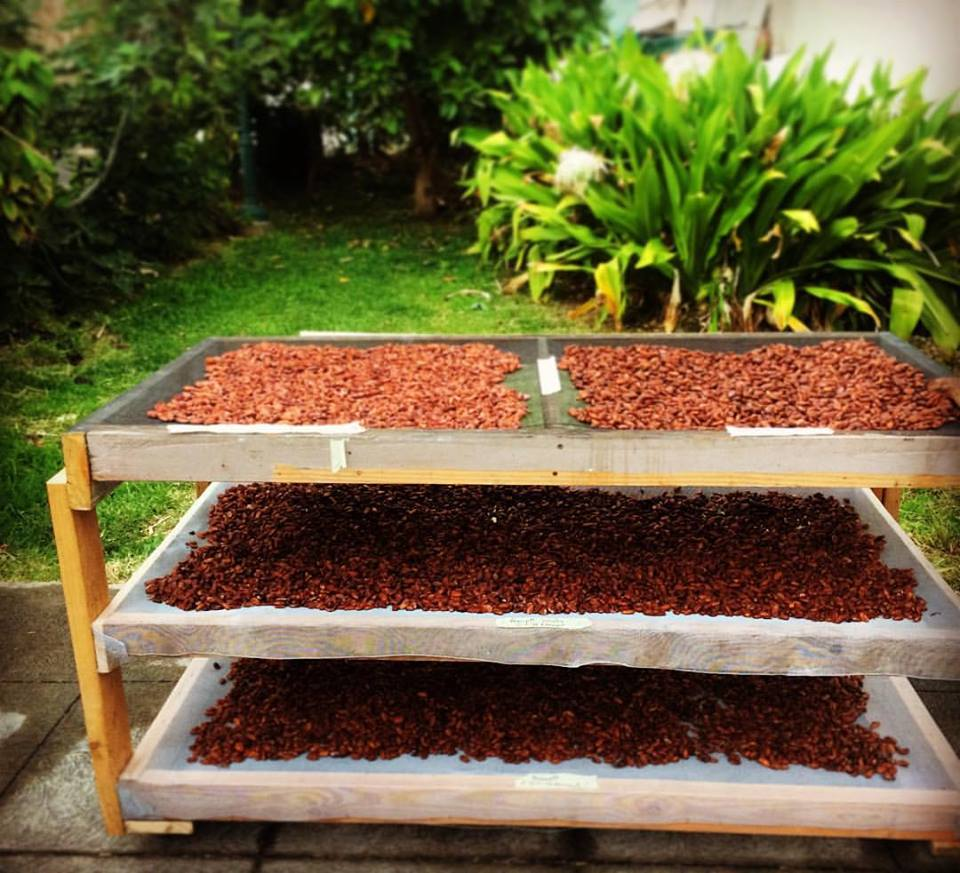 Cocoa beans drying at Madre Chocolate