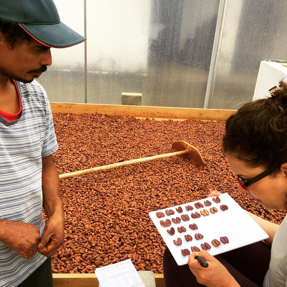 Juliana choosing beans at Vale Potumuju, photo by Baiani Chocolate