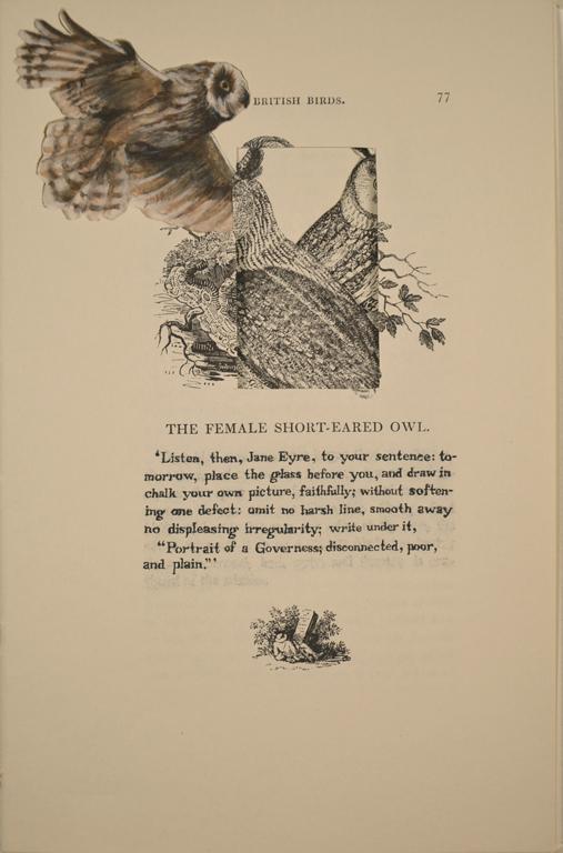 The Female Short-Eared Owl (Jane Eyre)