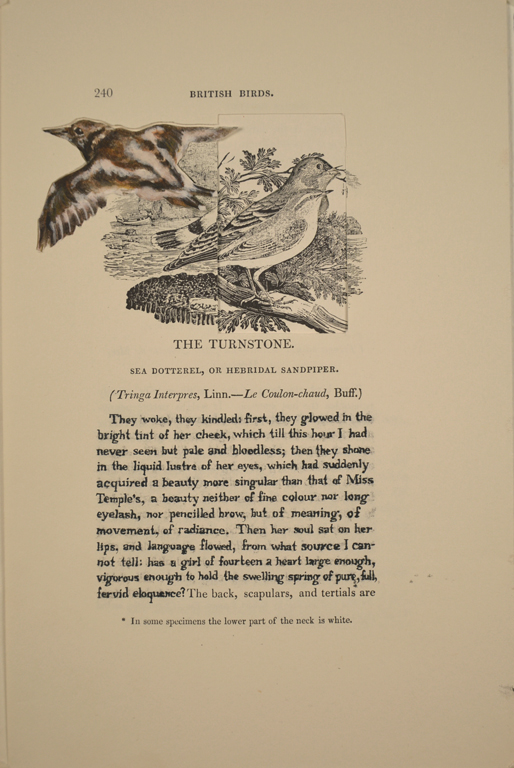 The Turnstone (Helen Burns)