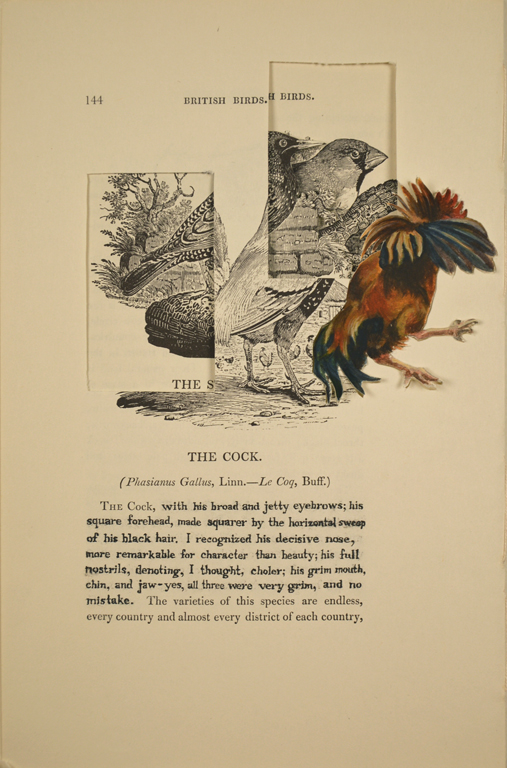 The Cock (Edward Rochester)