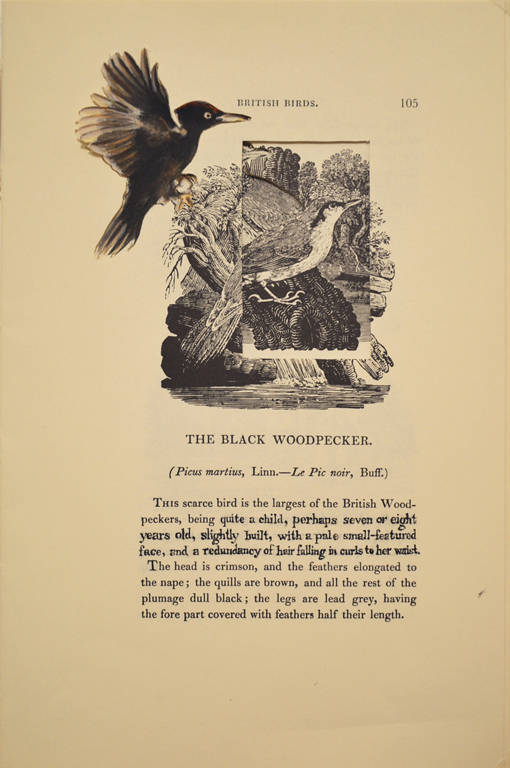 The Black Woodpecker (Adele Varens)