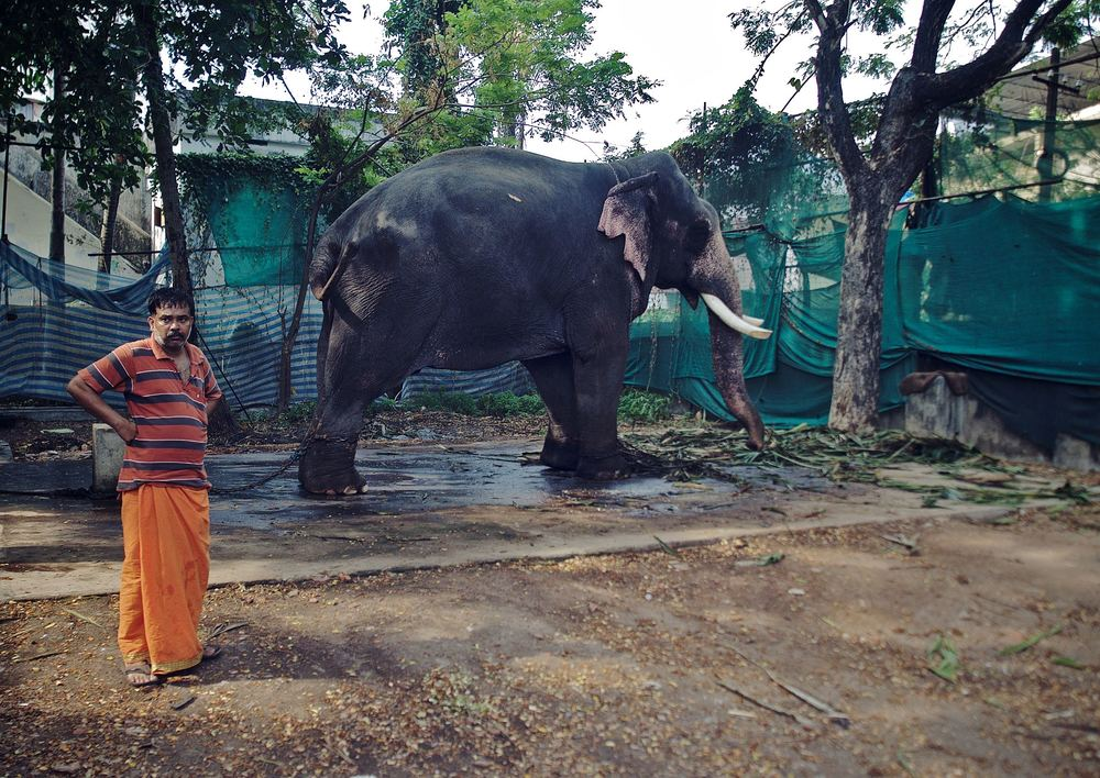 Injured Elephant