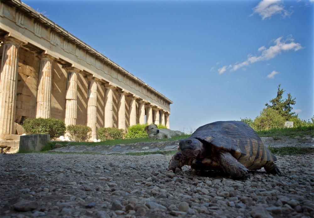 Tourist Turtle