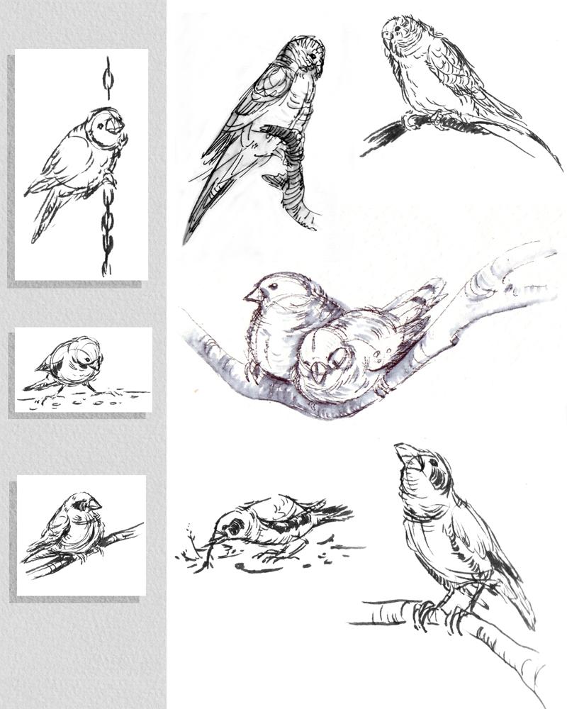 PetBirds.jpg