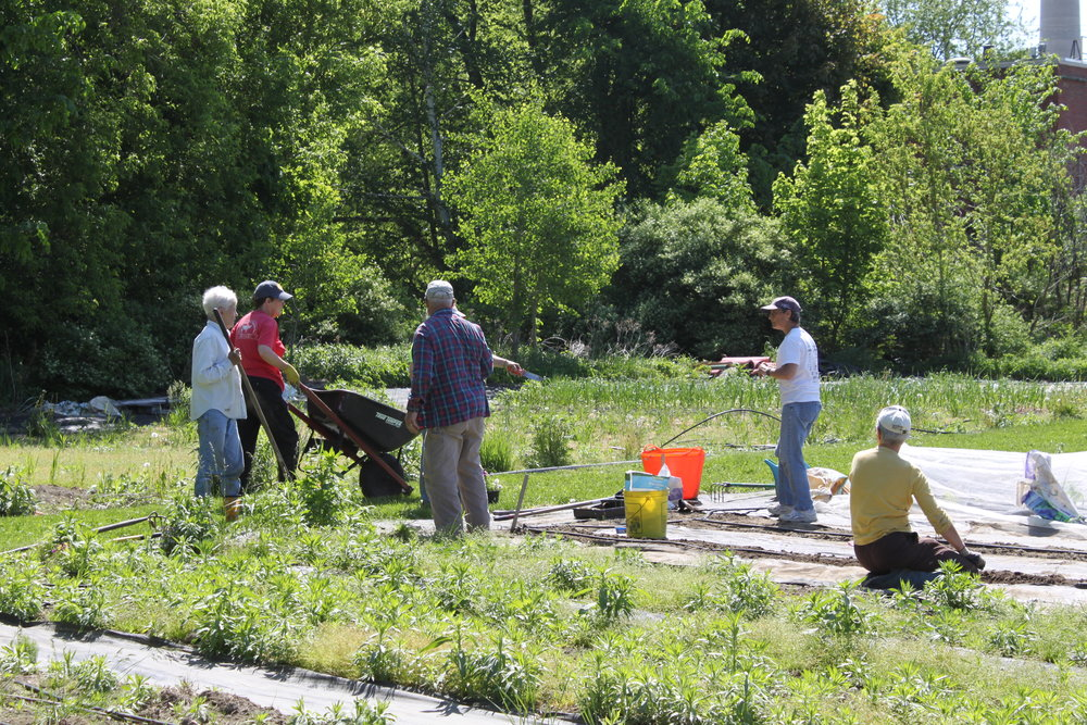 """The first garden work day at the """"Tuesday Night"""" Garden in Rumford has been scheduled. Join us next to Hosmer Field on Lincoln Avenue to help get the garden ready for the 2017 season. Please bring shovels, rakes, wheel barrels and hand tools to use in the gardens."""