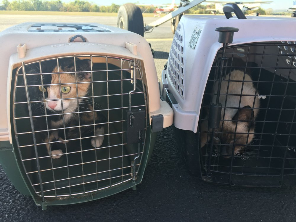 These pretty kitties didn't make a peep until landing. Ours don't make it the vet without whining!