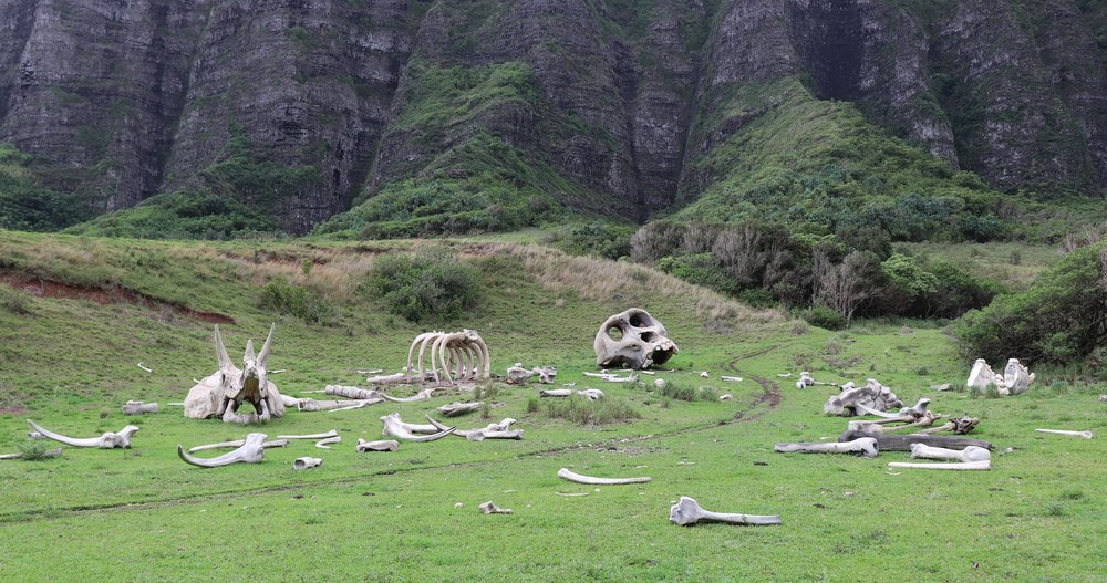 Creepy props used in Kong: Skull Island.