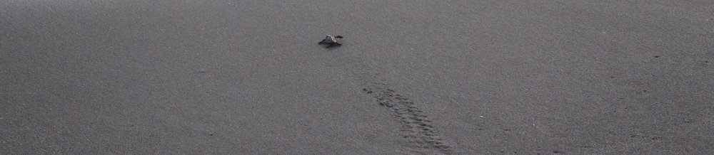 We were lucky enough to even see a baby sea turtle one morning!