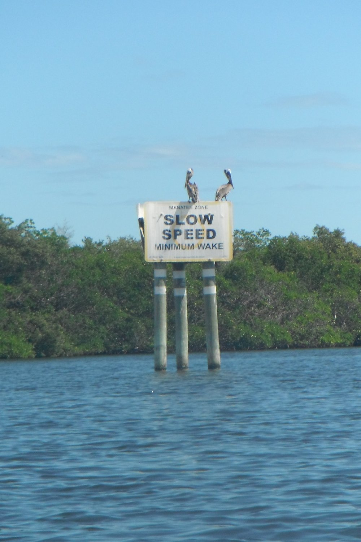 Plenty of birds like these Pelicans.