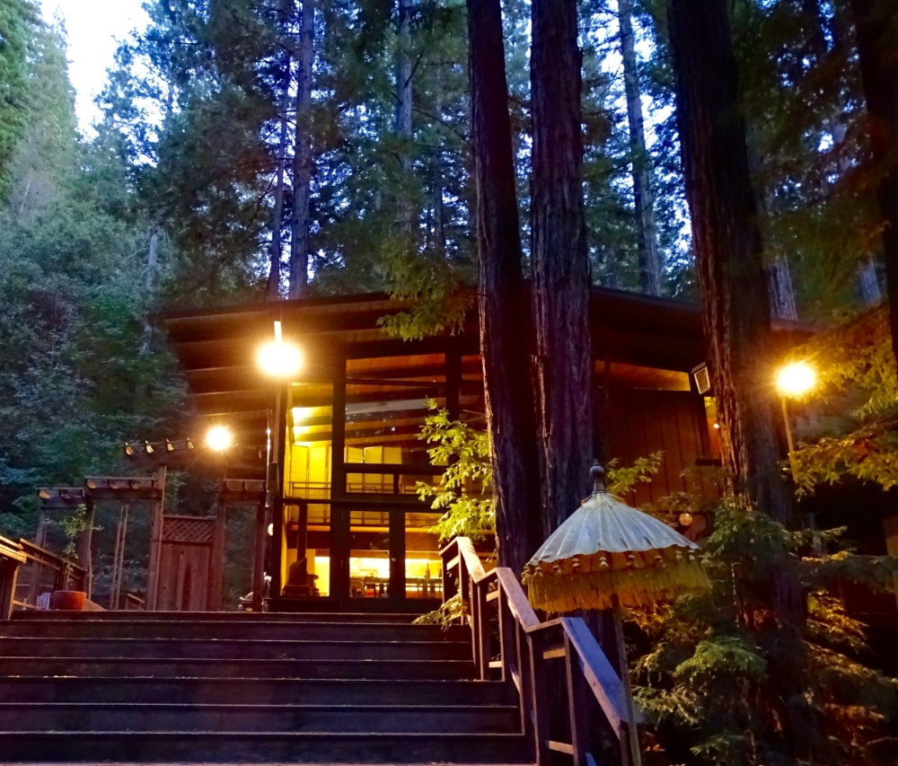 OUR MAGICAL REDWOOD RETREAT