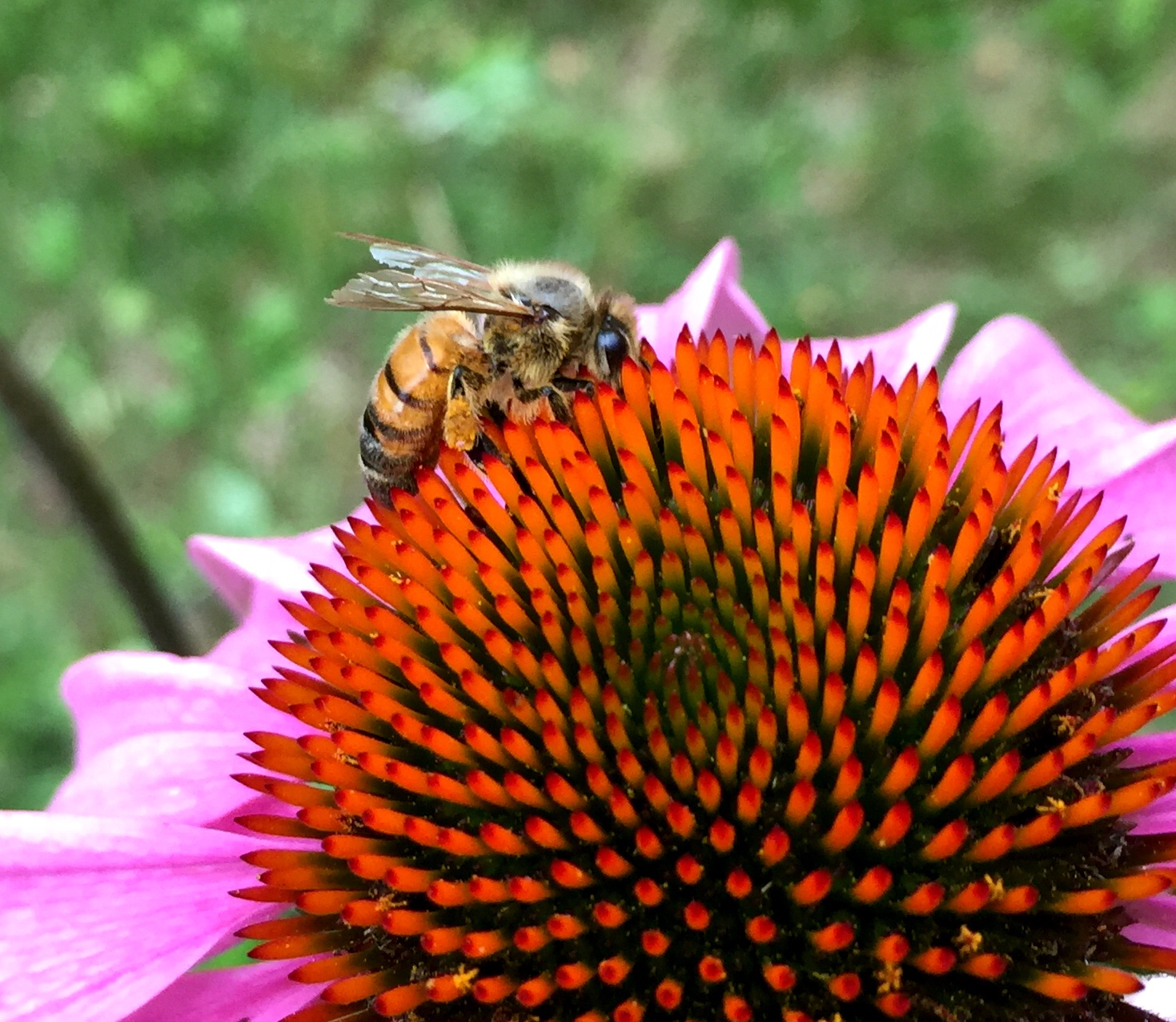 10 ways you can help save the bees — New York Bee Sanctuary
