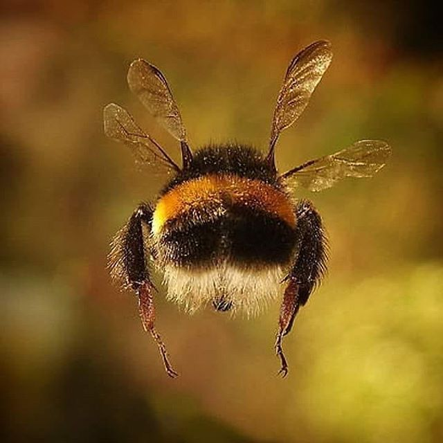 Thing in nature I am grateful for. Bees. Picture credit to @mag.giesheph.erd