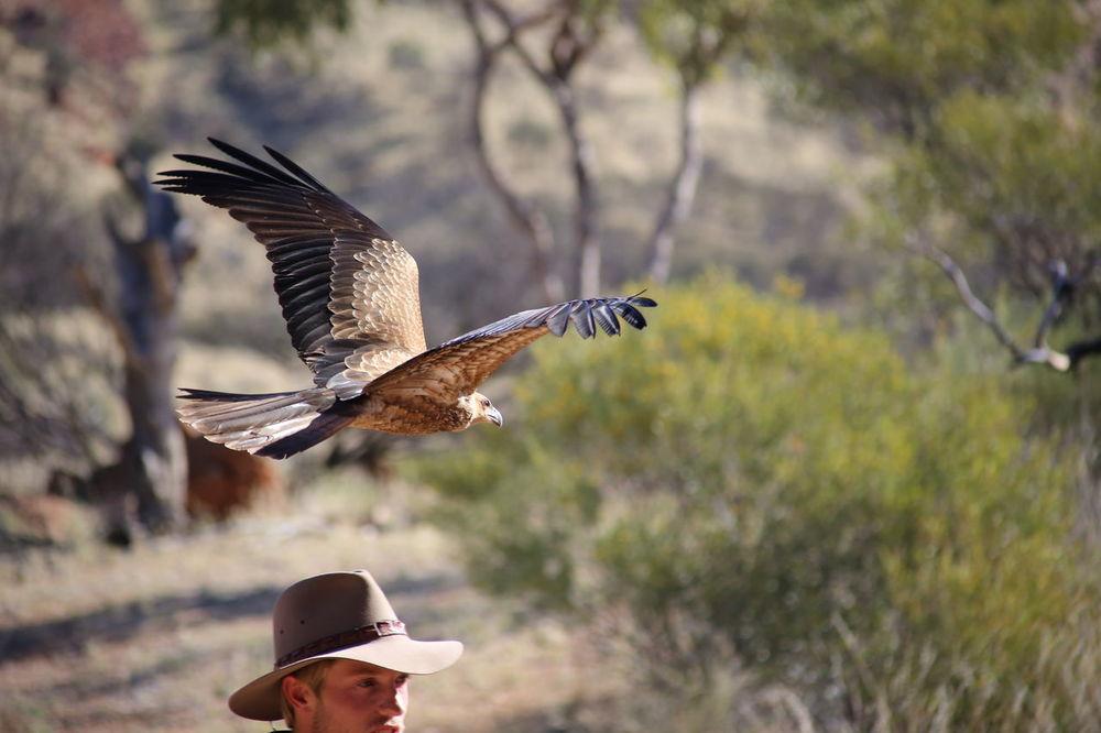 Alice Springs, 2014