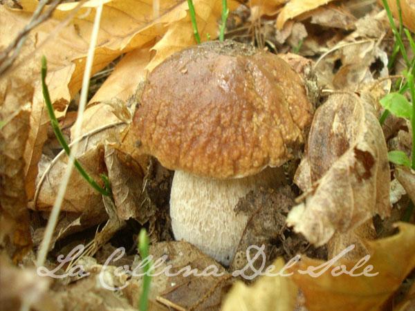 experience-fungi.jpg