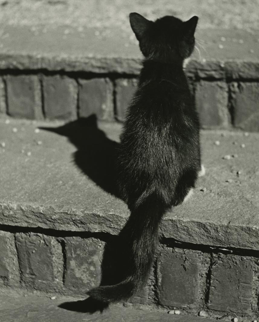 Kitten, HD C-Print, 24 x 15.81