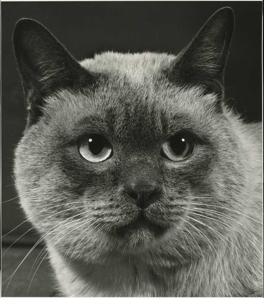 Siamese, HD C-Print, 36 x 31.72