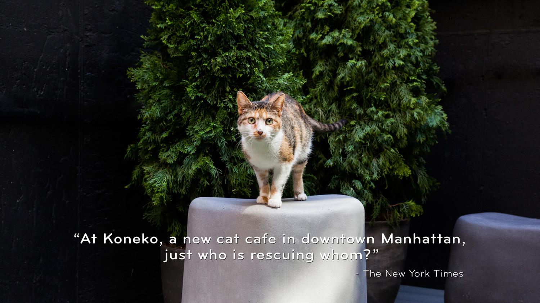 Koneko cat cafe malvernweather Choice Image