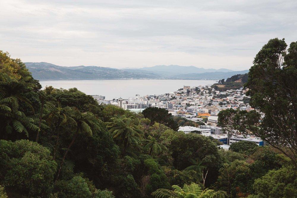 20160323_NZ_0006.jpg
