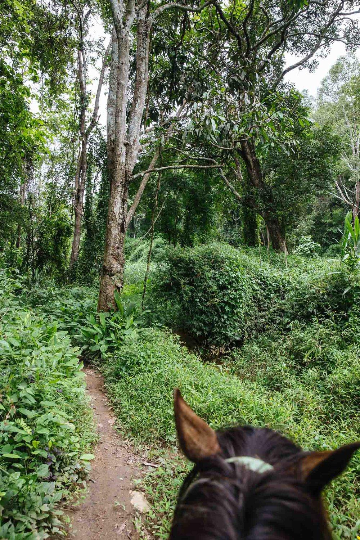 Thai Horse Riding Farm