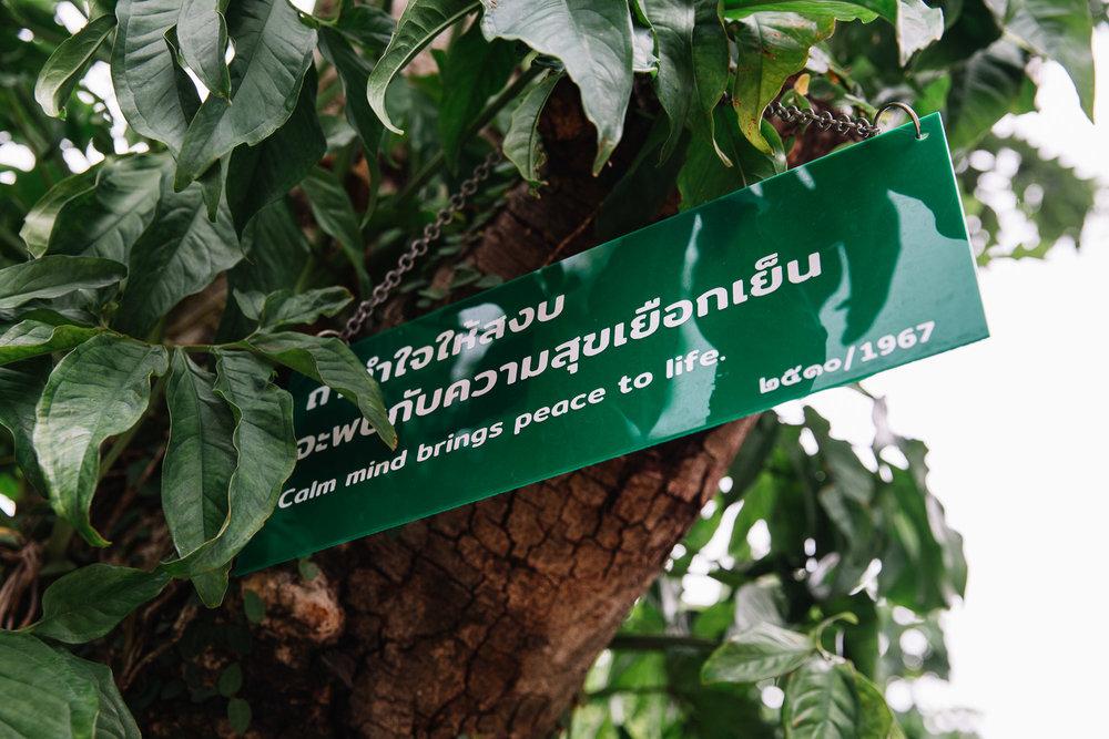 20180613_Chiang Mai_0100.jpg