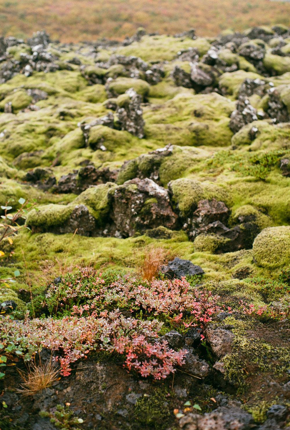 Iceland - 00193 - Chris Goetchius 2017.jpg