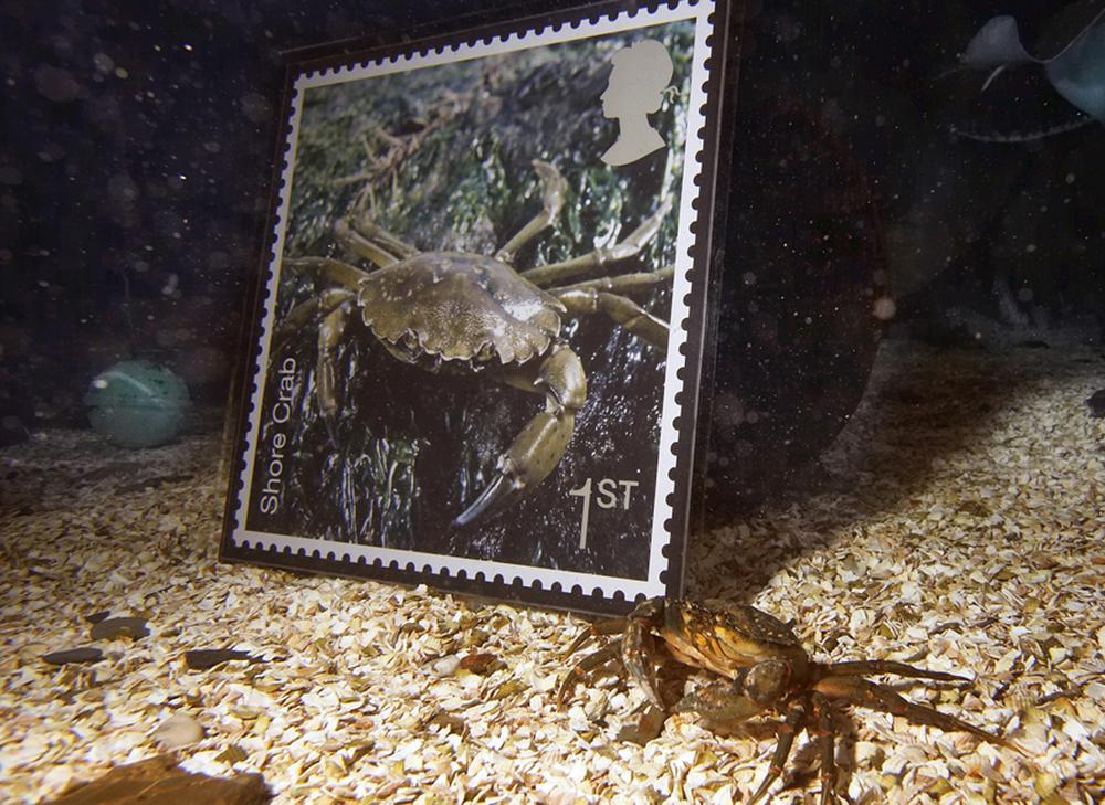 Royal Mail Sea … Shore Crab.jpg