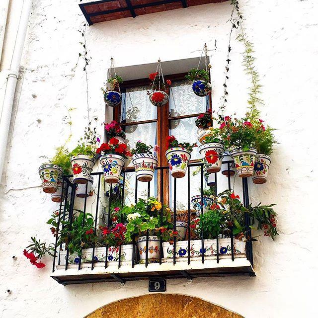 Оформление балкона цветами💐 - правильный подбор растений и тары.  Перед тем, как украсить балкон цветами, необходимо решить: ↪какие цветы выбрать для озеленения; ↪в какой таре они будут расти; ↪где и как расположить контейнеры с цветами; ↪создание композиций. Ампельные растения🌺🌺🌺 Ампельные цветы для балкона могут быть теневыносливые или светолюбивые. Такие растения имеют ниспадающие побеги, поэтому ёмкости с цветами подвешивают, чтобы стебли свободно струились в виде цветущего фонтана. К этому виду относятся: петуния, годеция, вьюнок, пеларгония, лобелия. Подвесные горшки располагают так, чтобы они не примыкали вплотную к стене и куст не был однобоким. Интересно, что некоторые цветы могут иметь сорта ампельные, вьющиеся и ковровые. Например, настурция. Безболезненно пребывают на открытых балконах выше шестого этажа низкорослые выносливые цветы: маргаритки, агератум, анютины глазки, настурция, клубневые бегонии, бархатцы, алиссум, низкорослые пеларгонии.  Разрабатывая дизайн цветов на балконе, следует нарисовать план и фасад балкона и проиграть варианты расположения цветочной тары. При этом надо учитывать, чтобы растения не загораживали друг другу свет.  #свадьбамечты #свадьба2016 #декорсвадьбы #оформлениесвадьбы #свадебныйбукет #букетневесты #свадьба #заказатьбукет #девушки #парни #доставкацветов #цветывкоробке #цветымосква #букетназаказ #цветывподарок #букет #флористика #купитьцветы #цветывшляпнойкоробке #цветысдоставкой #недорогойбукет #цветы #москва #девушки #подарок #цветывподарок #лето #флорист #пионы #пионысдоставкой #пионывмоскве #свадьбамосква2016