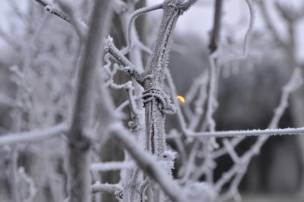 Emozionale_Ghiaccio e Neve (2).jpg