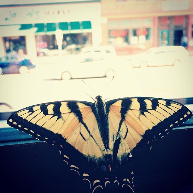 Waiting on the rain #torchwerks #butterfly #productionlife