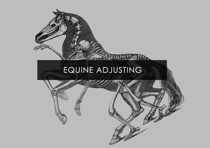 Does my horse need adjusting?
