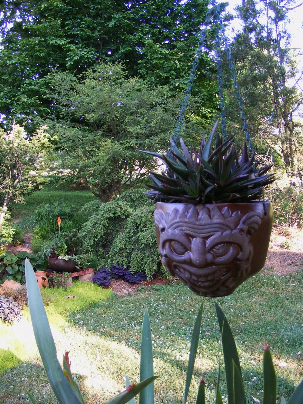 7-20-2015-Calton-2-aloe head.JPG