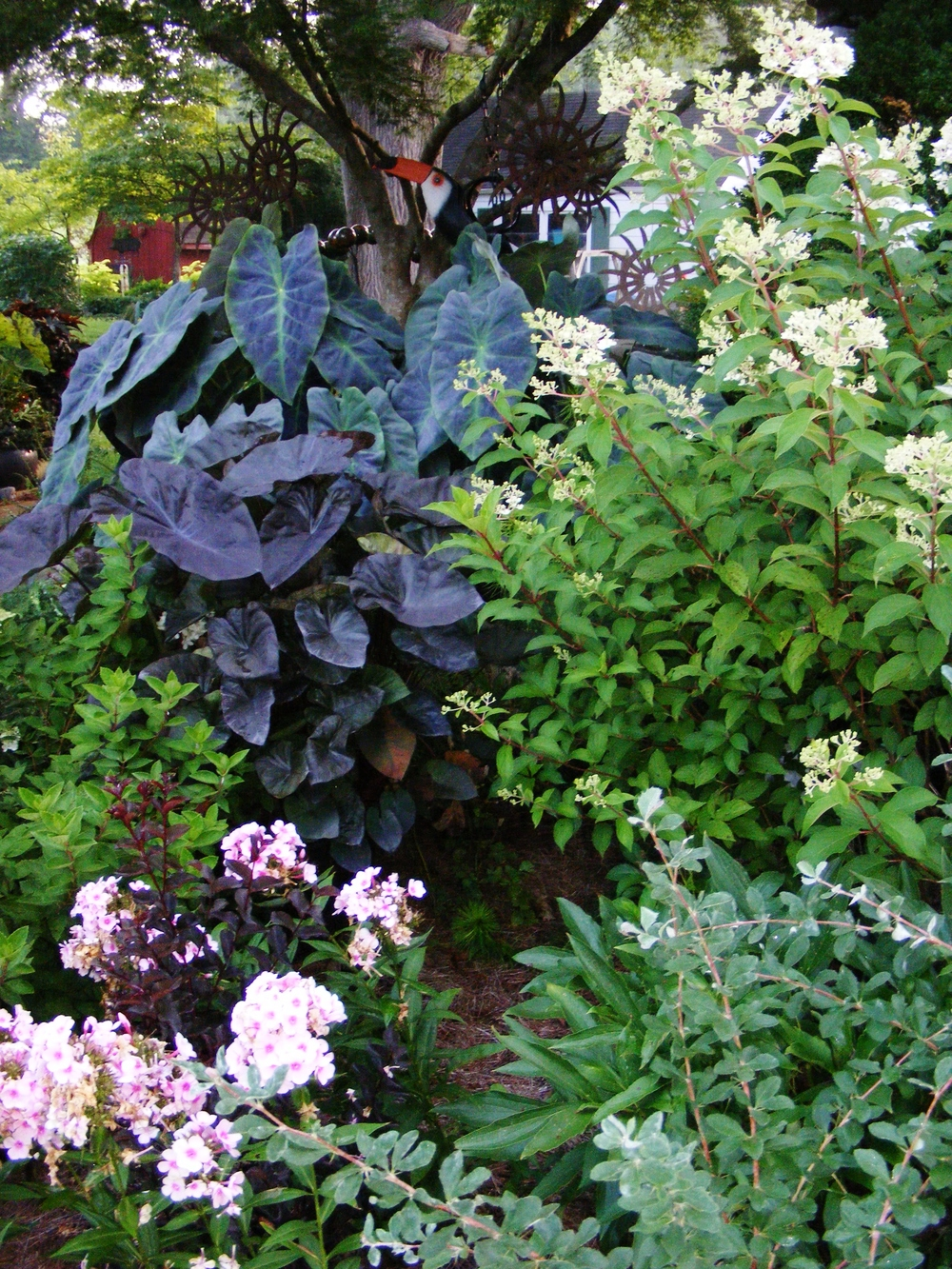 Mixed colocasia, phlox, and hydrangea