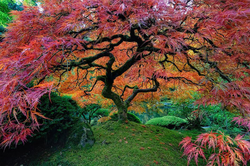 And finally, here's a photo gallery of of 11 of the most spectacular trees in the world. I tried to pick a favorite, but it's HARD! See more HERE. Let's keep spreading the Gardeny Goodness, everyone! Send photos! Michelle@GardenyGoodness.com. Thanks! ~Michelle