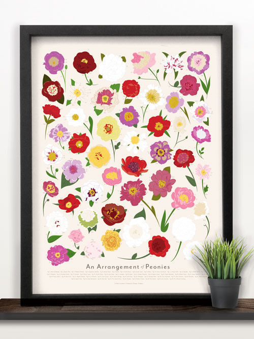 Peonies all year long. A gorgeous poster!  They also have  roses, tulips, and sunflowers . And a poster of  every bird in North America . So cool!