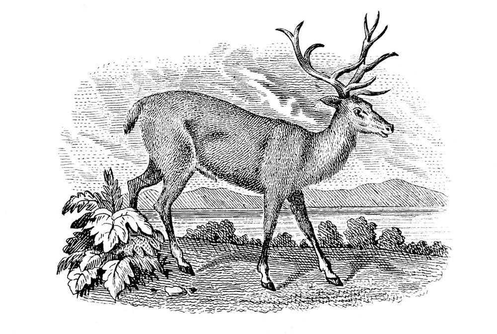 Deer-VintageGraphicsFairy1.jpg
