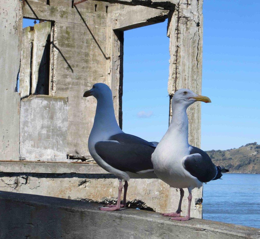 056-Alcatraz Island  February 28 2017.jpg