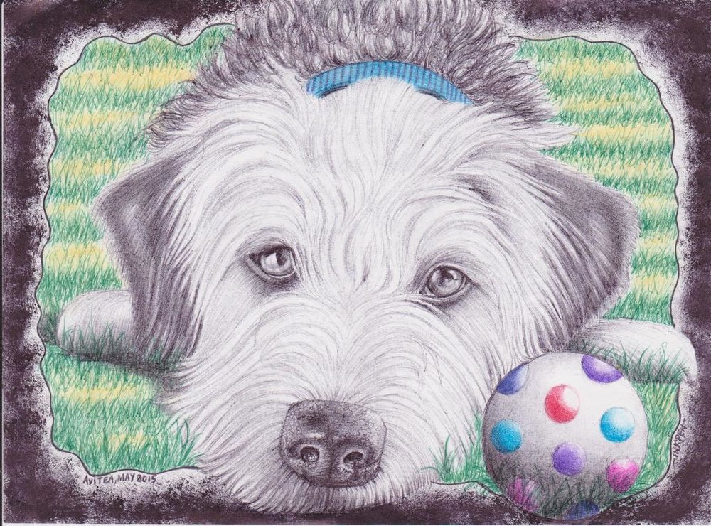 Shaggy Pooch by Chris Avitea 001a.jpg
